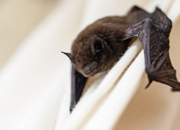 Official: Florida resident dies of rabies from bat bite